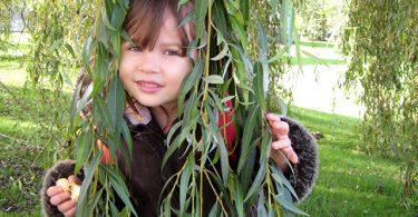 Wordless Wednesday: Neighbourhood Willow Tree