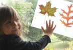 Fall Craft: Make a Leaf Book
