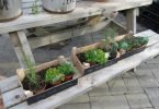 I Want to Grow a Herb Garden