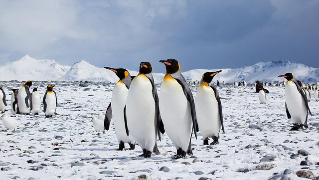 Image result for grouping penguins