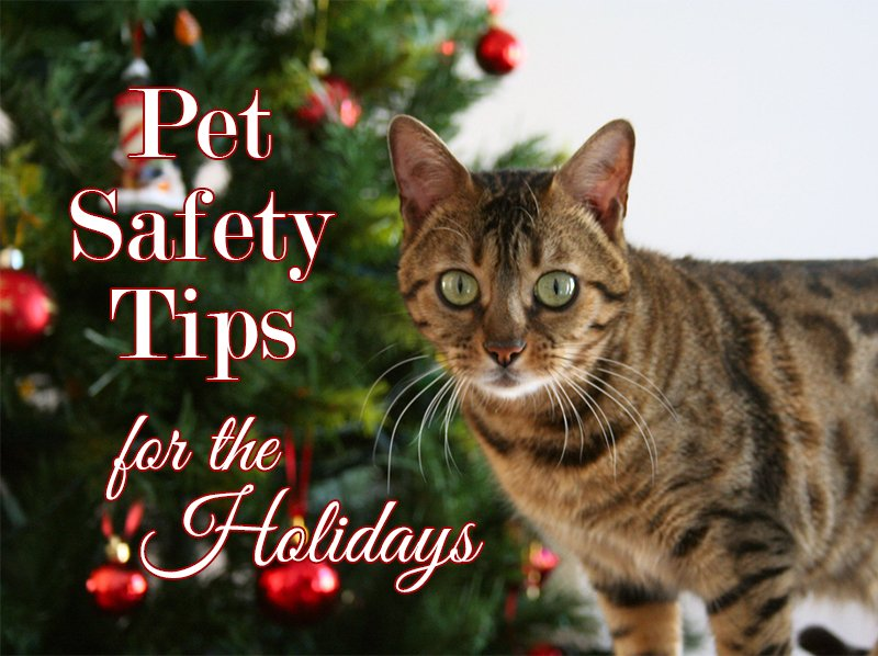 Pet Safety Tips for the Holidays