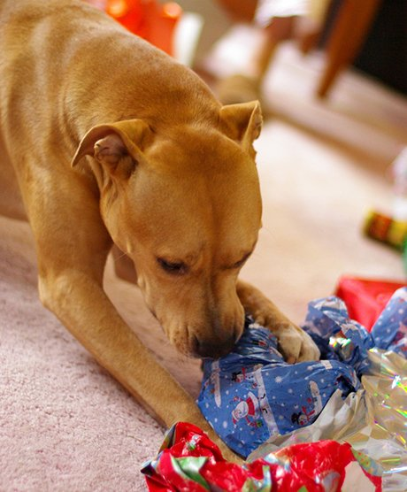 Keep pets from ingesting paper, tape, and ribbons as these can cause intestinal blockages.