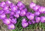 Wordless Wednesday: Feels Like Spring!