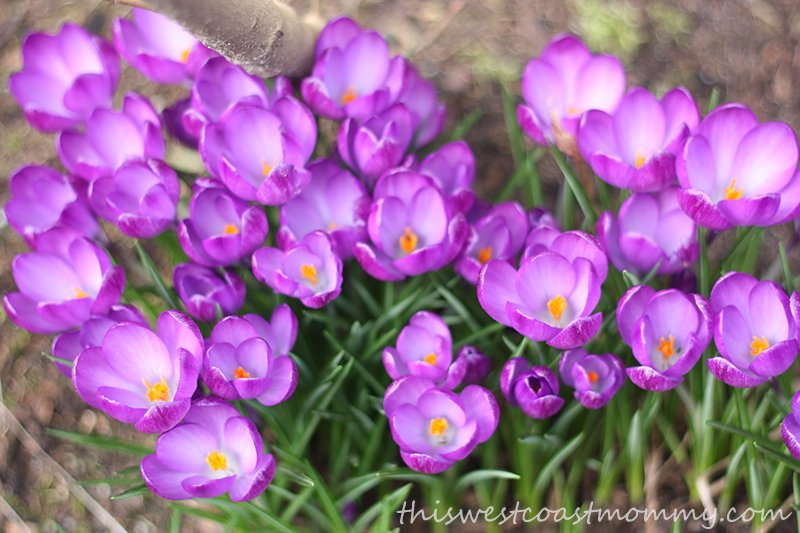 Impressions of Spring