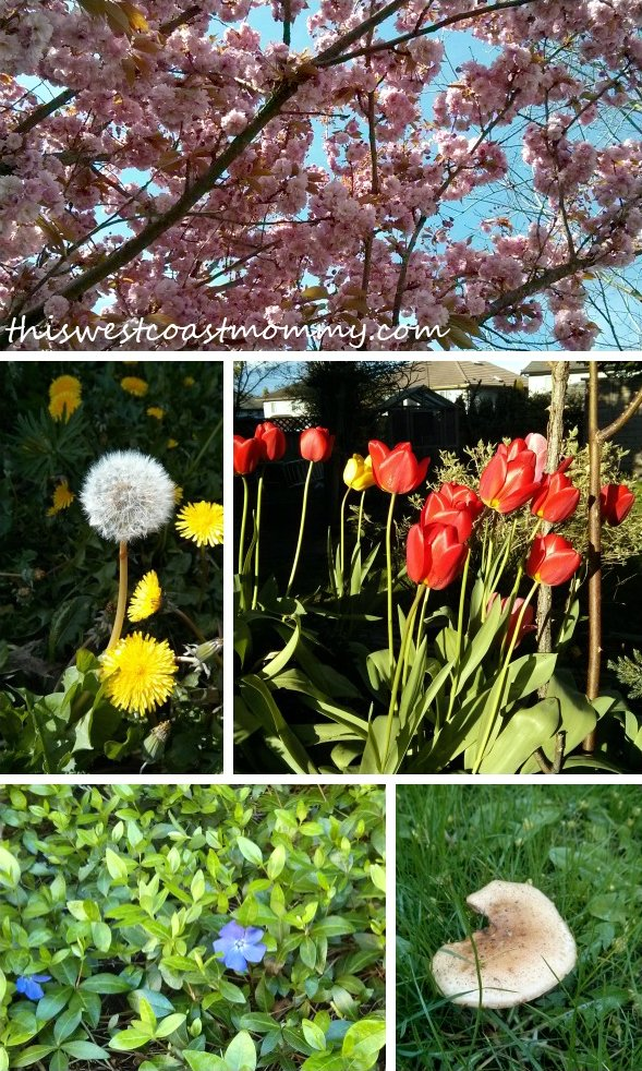 West Coast Spring