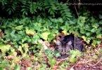Wordless Wednesday: Garden Visitor