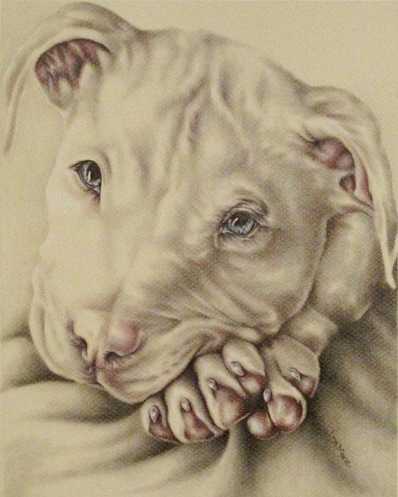 White pit bull print