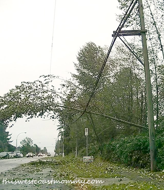 tree down on power lines