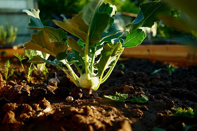 Compost helps grow new food