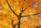 Weekly Peek: The Colours of a West Coast Fall