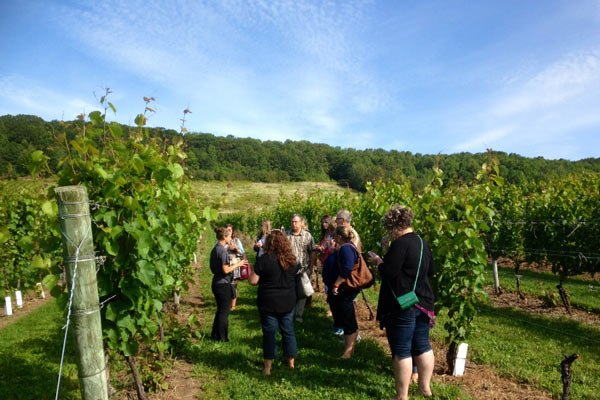 afternoon escape wine tour