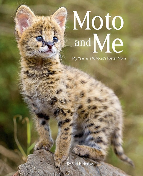 """Moto and Me: My Year as a Wildcat's Foster Mom"" by Suzi Eszterhas"