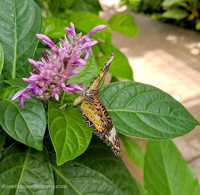 2 Days in Denver with Kids: The Butterfly Pavilion