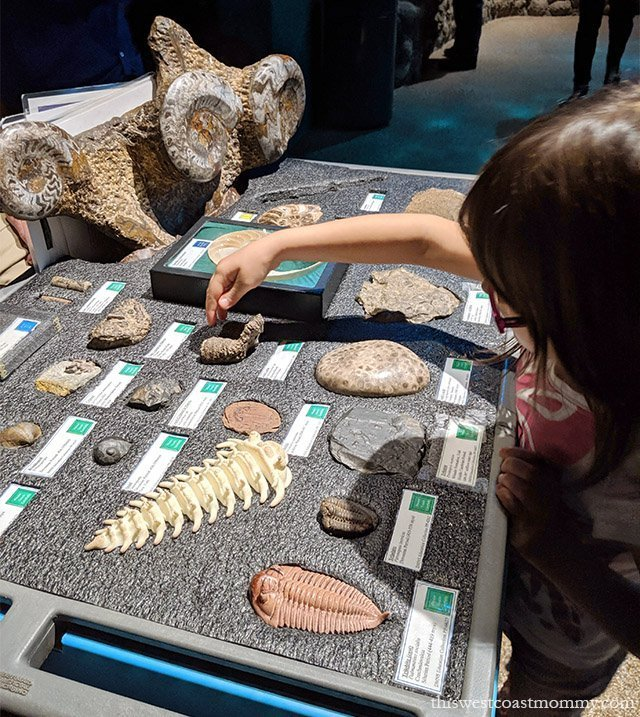 2 Days in Denver with Kids: The Denver Museum of Nature and Science